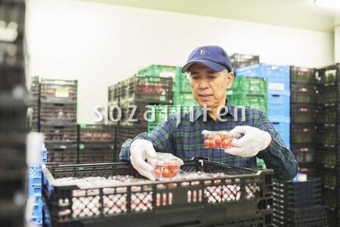 倉庫で商品を整理するシニアの男性