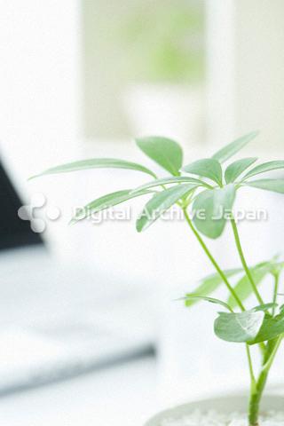 観葉植物とコンピュータ