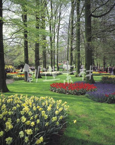 キューケンホフ公園の花壇