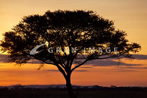 アフリカイメージ