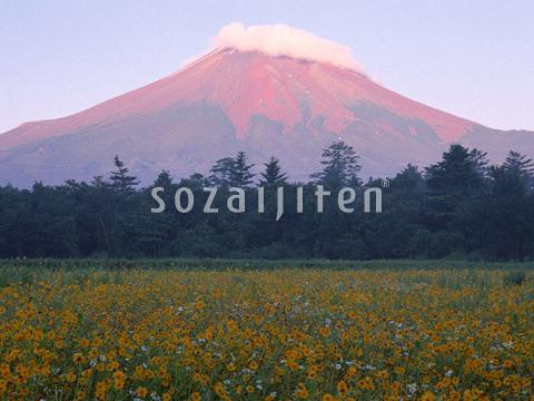 花畑と富士山