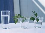グラスと植物