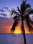 ヤシの木と夕日