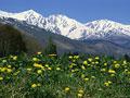 花畑と山脈