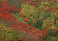 紅葉の十勝岳