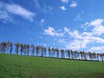 牧草地と木立