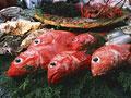 魚介いろいろ