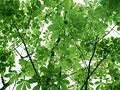 タイトル:葉