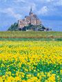 モンサンミシェルと菜の花畑