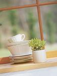 食器と観葉植物