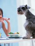 ペットと食事