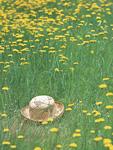 花畑と帽子