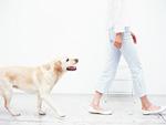 イヌと女性