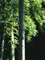 タイトル:竹