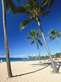 砂浜とヤシの木