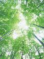 タイトル:樹木