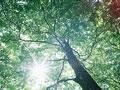 タイトル:木漏れ日