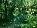 森林と木漏れ日の林道