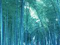 タイトル:竹林