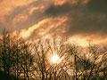 朝日と森林