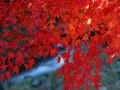 タイトル:紅葉