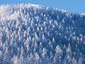タイトル:山