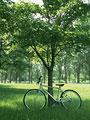 自転車と樹木