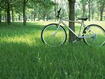 木陰の自転車