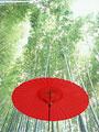 野点傘と竹林