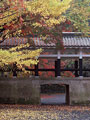紅葉と回廊