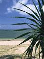 アダンの葉と海岸