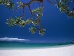 砂浜と樹木