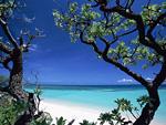 樹木と海岸