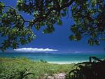 海岸と樹木