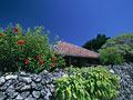 石垣と民家