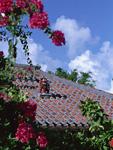 民家の屋根とシーサー