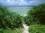 海岸への道