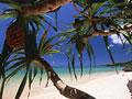 アダンの木と砂浜