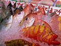 市場の魚介