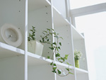 シェルフと観葉植物