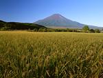たんぼと富士山