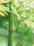 木漏れ日と竹