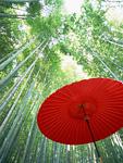 竹林と番傘