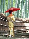 番傘をさす着物の女性