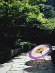 木々の茂る石畳の道と番傘