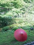 宝泉院の庭と番傘