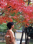紅葉を見つめる着物姿の女性