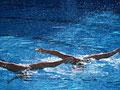 水泳 シンクロナイズドスイミング