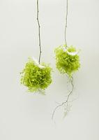 観葉植物と羽