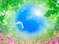 タイトル:葉と青空